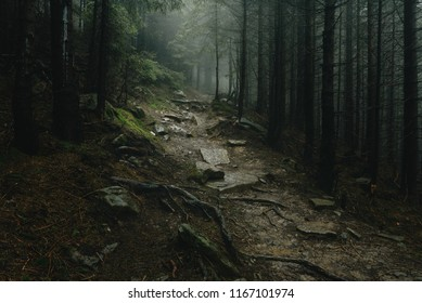 Landscape of a mystical forest covered with fog. Trail in a forest with fog.