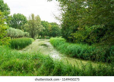 landscape in National Park Biesbosch, Merwelanden, Dordrecht, The Netherlands