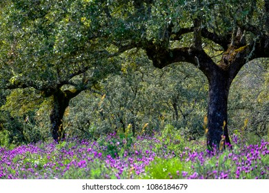 Landscape in National Park of Monfrague in Caceres province in Extremadura Spain