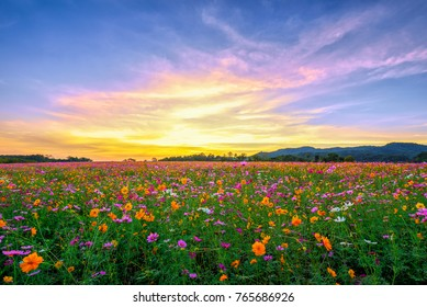 Landscape nature background of beautiful pink and red cosmos flower field on sunset