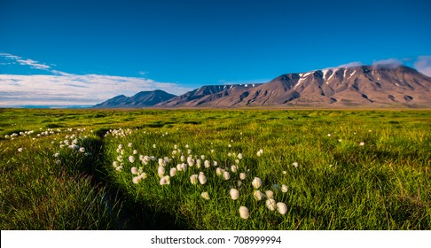 Landscape of a nature grass of a  sunset sky with clouds in the mountains of Spitsbergen Svalbard near the Norwegian city Longyearbyen