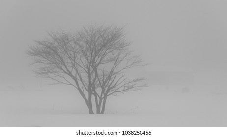 Landscape nature loneliness tree on the morning fog