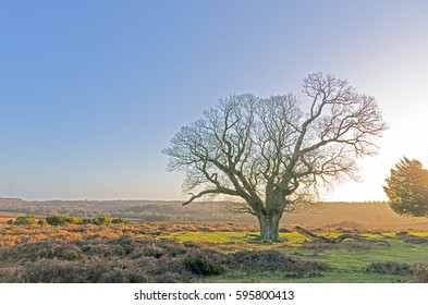 The landscape near Bratley View in the New Forest National Park