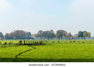 Landscape near Eerbeek, Netherlands with sheep and cows on a cold sunny morning