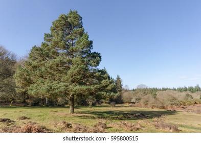 The landscape near Linwood Bottom, New Forest Nationa Park