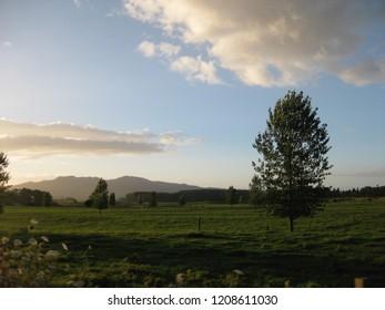 Landscape near Waitomo New Zealand