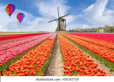 Landscape of Netherlands tulips with hot air ballon and windmills in the Netherlands.