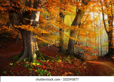 Landscape Nice fantasy Forest with creek in a golden Autumn. Wall-Poster Idea.