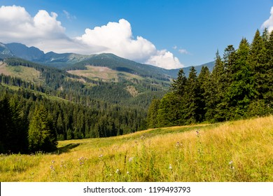 landscape with nice mountain valley in Low tatras, Slovakia