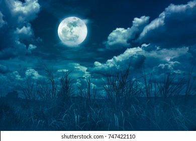 Landscape of night sky with clouds. Beautiful bright full moon above wilderness area in forest, serenity nature background. Outdoors at nighttime. The moon taken with my own camera.