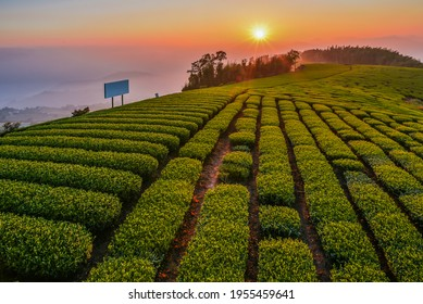 Landscape Night View Of Beautiful Oolong Tea Garden At The 1314 Observation Deck, Alishan, Riley, Chiayi, Taiwan