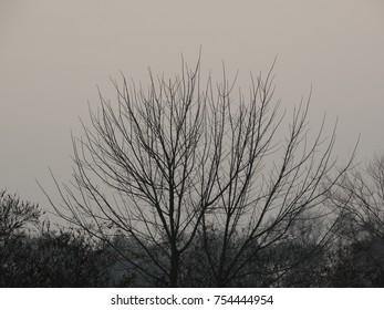 landscape in november
