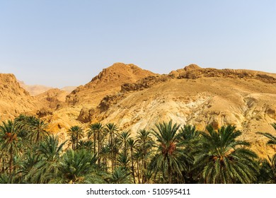 Landscape of oasis in the canyon in stone desert. Sahara at sunny day.