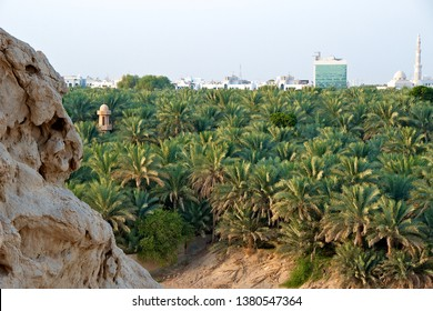 Landscape of an oasis of date palm trees against the modern skyline of a desert city, in Al Ain, the UAE