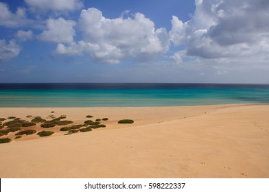 landscape of the ocean and sand beach