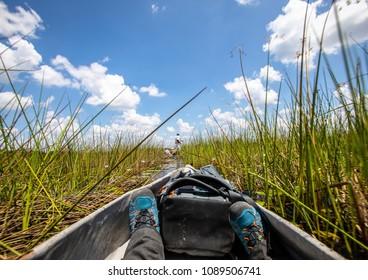 Landscape of the Okavango Delta in Botswana during summer period