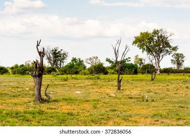 Landscape of the Okavango Delta (Okavango Grassland), One of the  Seven Natural Wonders of Africa, Botswana