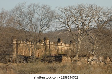 Landscape with old abandoned fort in Ranthambore National Park, Rajasthan, India