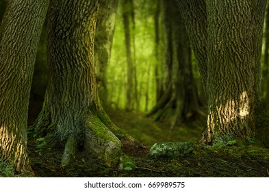 Landscape with old massive roots and trees shined in dark shady forest