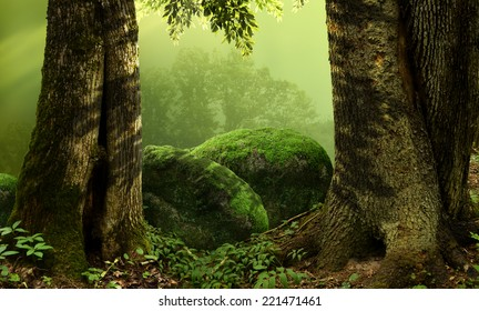 Landscape with old massive trees and mossy stones