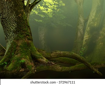 Landscape with old mossy tree and roots