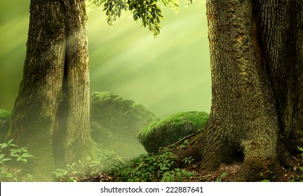 Landscape with old mossy trees, rocks and sunbeams