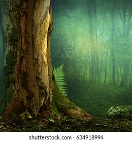 Landscape with old tree and fern in blue haze forest