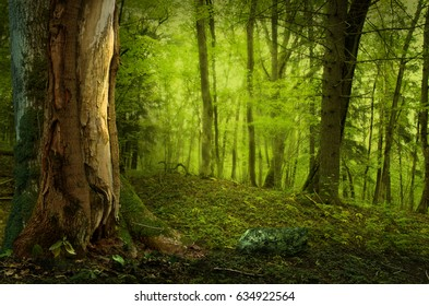 Landscape with old tree in nice shady forest