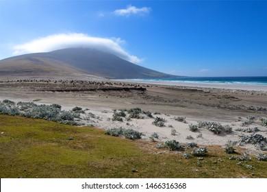 landscape on the falkland islands