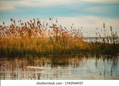 Landscape on the river. Dawn sun of reeds painted in warm orange color, the silence of nature, reflection in the water, backwater fishing, cool place.