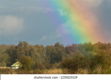 Landscape of Oostvaardersplassen, Netherlands, with rainbow.