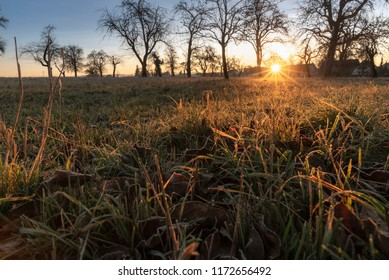 Landscape with an orchard with leafless trees, a meadow with dried and frozen grass, warmed by the December sunrise, near Schwabisch Hall, Germany.