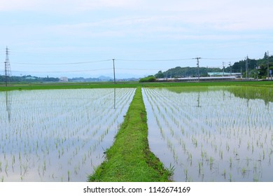 The landscape of paddy fields