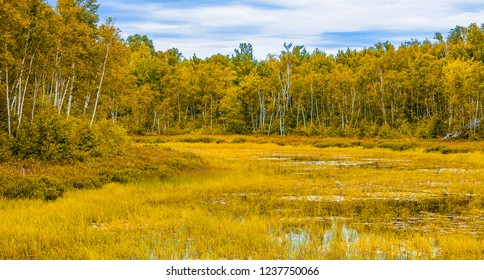 Landscape painting of beautiful forest in Sudbury, Ontario, Canada. wallpaper and forest background.