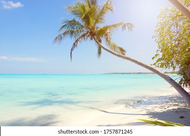 Landscape of a palm tree in a tropical beach with white sand and turquoise water in Maldives.