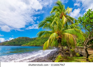 Landscape with palm trees at the ocean, Nuku Hiva, Marquesas Islands, French Polynesia