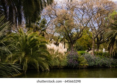 Landscape with palms and other exotic plants in the Mediterranean climate.