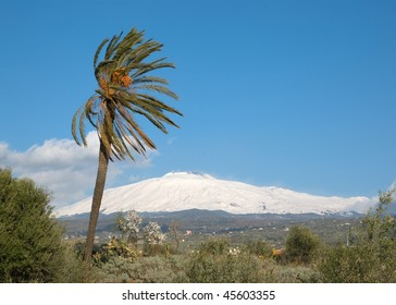 landscape for a palmtree and volcano Etna covered by snow