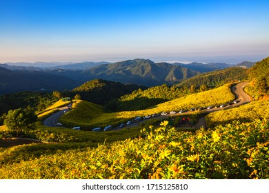 Landscape panorama of Tung Bua Tong forest park with Mexican Sunflower field at sunrise in Doi Mae U Kho, Mae Hong Son, Thailand, Travel winter season concept