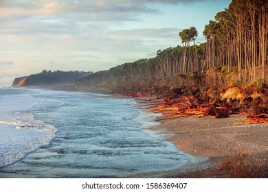 Landscape of paradise tropical atmoshpere on beach at the West Coast around Haast, South Island, New Zealand. sunrise shot, Typical vegetation at Haast Beach