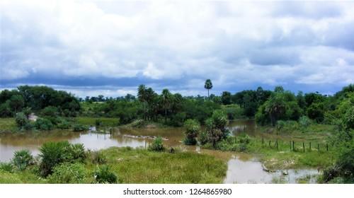 21411ea12752 landscape of Paraguayan Chaco