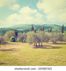 Landscape Park in the Foothills of Italian Alps, Instagram Effect