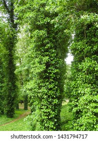 Landscape Park in Rogalin. Poznan, Poland