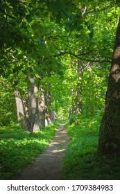 Landscape of a park in summertime
