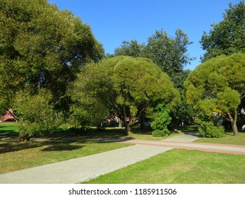 Landscape of the Park with sun-lit trees. Beautiful autumn forest lit by sunlight.