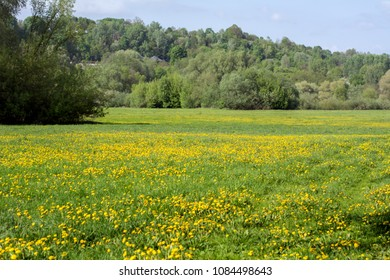 Landscape with a pasture covered with dandelions and trees in the background