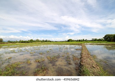 Landscape of a peaceful rice field on clouds and sky background : Thailand