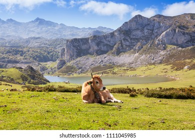 Landscape of Peaks of Europe with a cow