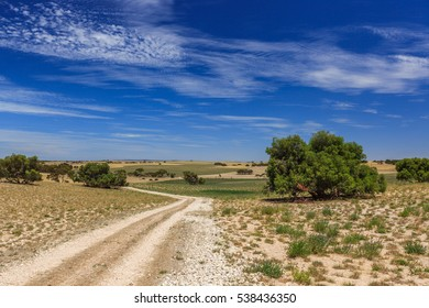 Landscape with perspective of disappearing dirt road over hills, dry grass and clover green Medicago with scattered trees and shrubs near Meningie South Australia