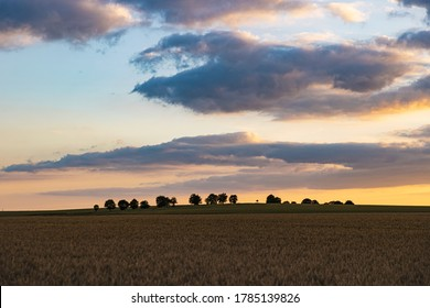 Landscape photo across field of wheat at sunset